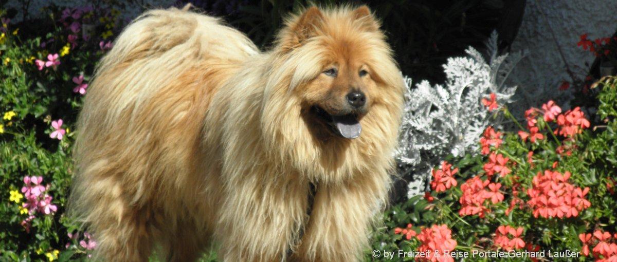 Oberpfalz Ferienhaus mit Hund im Oberpfälzer Wald