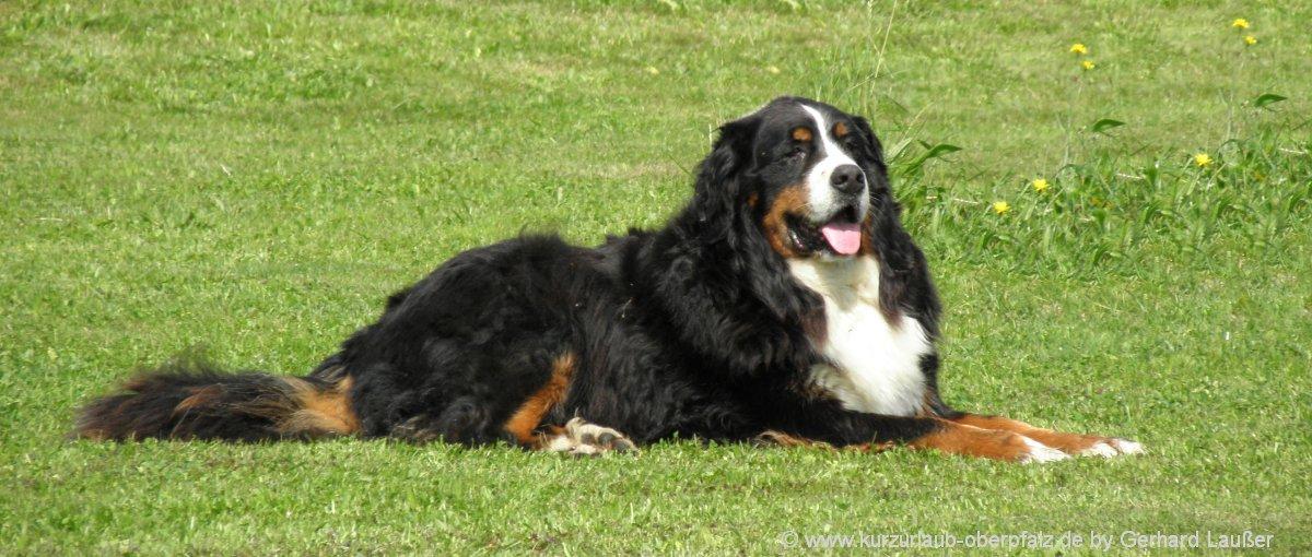 Pensionen in der Oberpfalz für Urlaub mit Hund